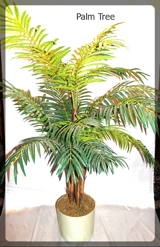 palm tree furniture rental