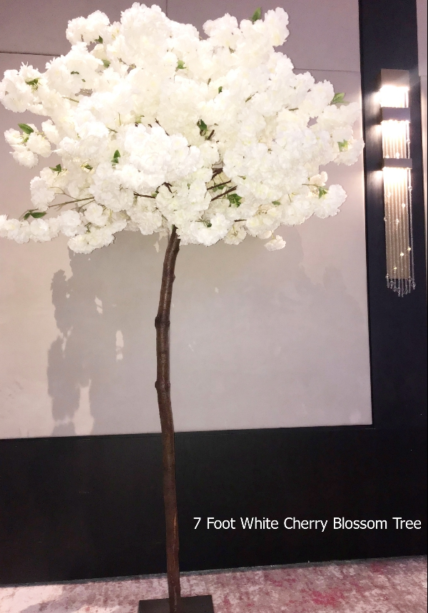 Seven Foot Tall Cherry Blossom Tree