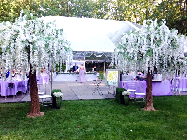 Wisteria tress 10 foot tall